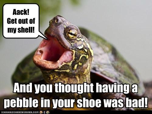 Turtle Torture