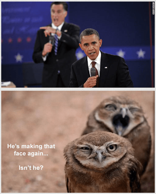 Mitt Romney,barack obama,owls,face,debate,annoyed