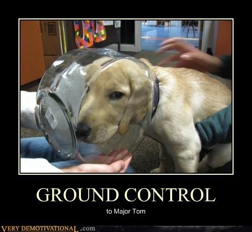 dogs helmet - 6687637760