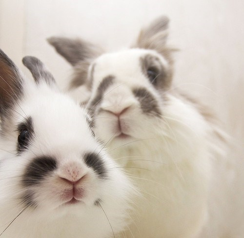 Bunday,happy bunday,bunny,rabbit,squee,101,black and white