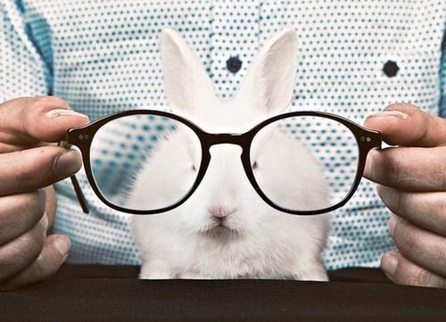 happy bunday Bunday bunny rabbit glasses nerd squee - 6687784704