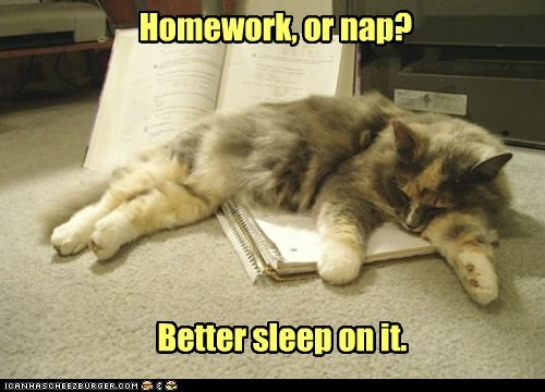 Homework, or nap? Better sleep on it.
