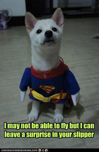 superman shiba inu puppy costume - 6687902208