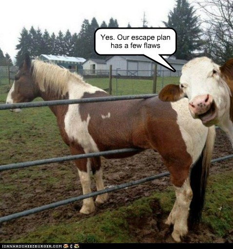 escape plan,cow,flaws,fence,stuck,horse