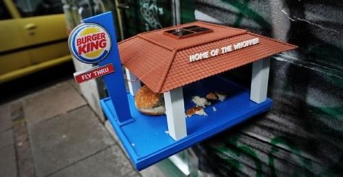 birds design bird fast food - 6688040448