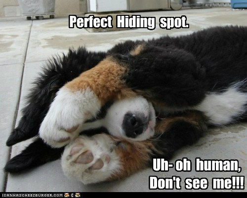 Perfect Hiding spot. Uh- oh human, Don't see me!!!