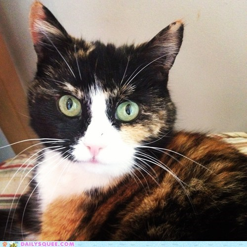 reader squee pet Cats squee - 6688474880