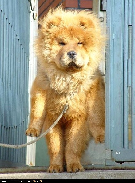 liondog,windy