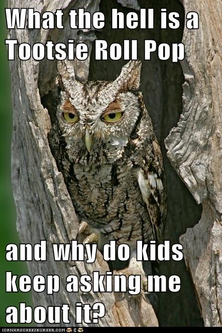 annoyed,asking,kids,tootsie roll pop,licks,Owl,why