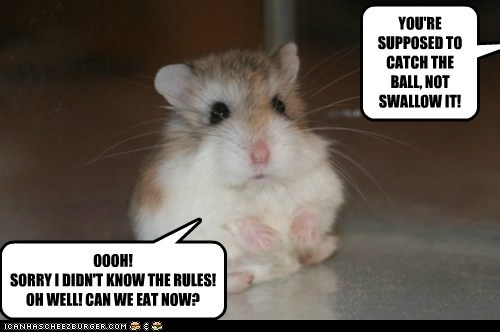 rules game hungry ball hamster swallow eating
