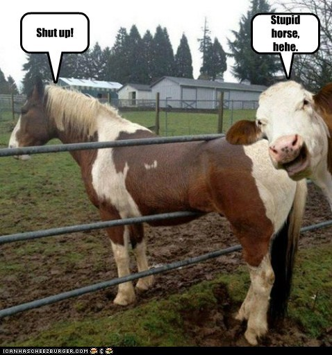 shut up cow fence stuck laughing stupid horse - 6689291008