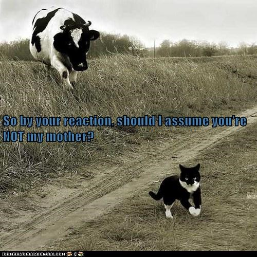 cat,asking,cow,mother,angry,reaction