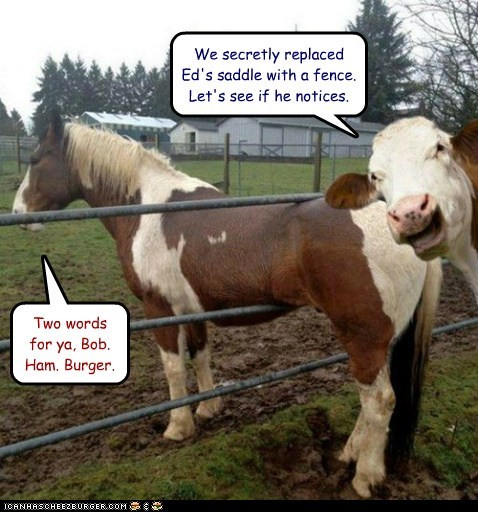 annoyed,cow,fence,replaced,stuck,saddle,hamburger,horse