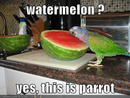 speaking,watermelon,yes this is x,parrot