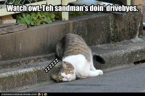 sleepy tired sleep Cats captions sandman - 6690388736