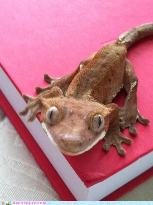 reader squee squee lizard smile toes - 6690686464