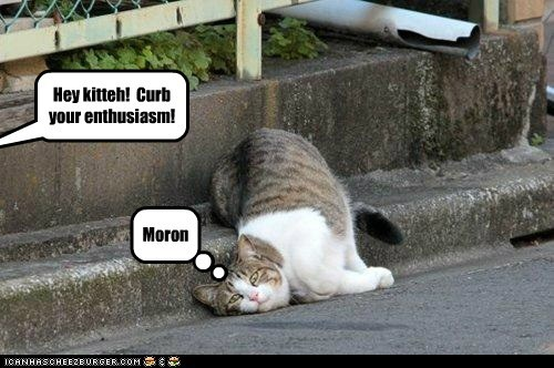 Hey kitteh! Curb your enthusiasm! Moron