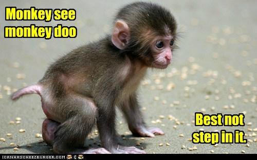 poop pun saying monkey - 6690929152