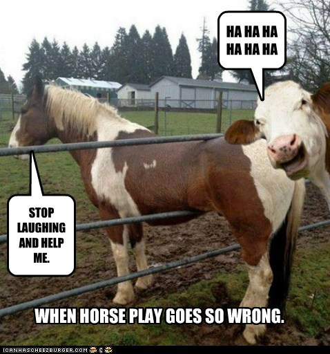 HA HA HA HA HA HA STOP LAUGHING AND HELP ME. WHEN HORSE PLAY GOES SO WRONG.