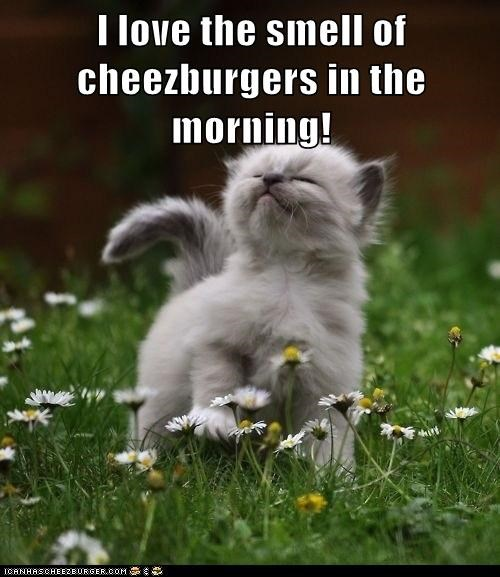 Cheezburger Image 6691406848