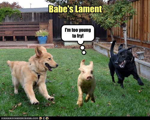 dogs,movies,pig,chasing,lament,babe,running,fry