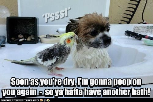 dogs,poop,birds,puppy,bath,mean,what breed