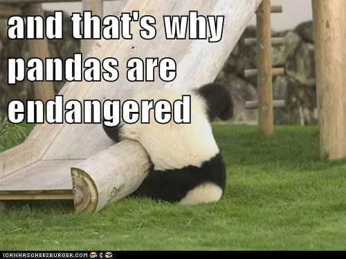 slide falling endangered thats-why panda stupid clumsy