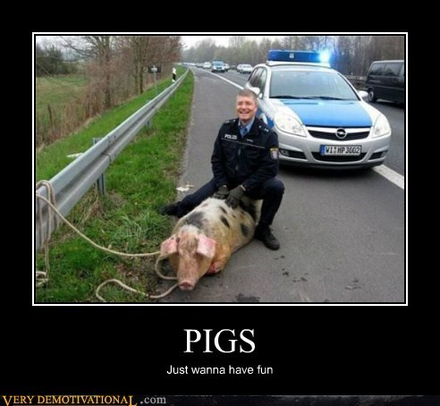 PIGS Just wanna have fun