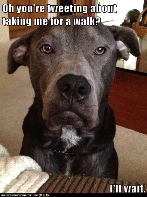 dogs tweeting sarcastic grumpy walk boxer - 6691886848