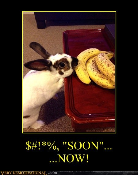 SOON now bunny banana