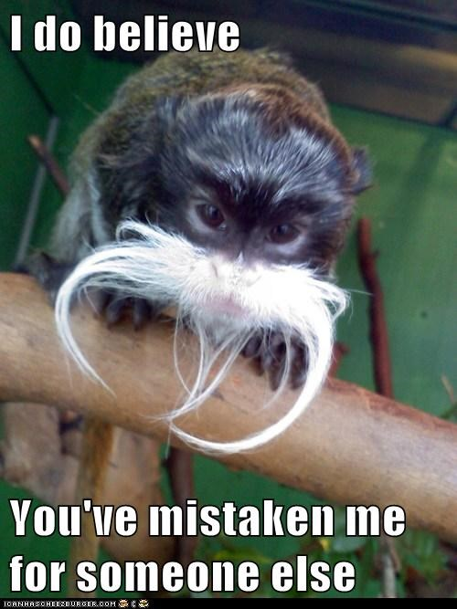 disguise mustache mistaken monkey