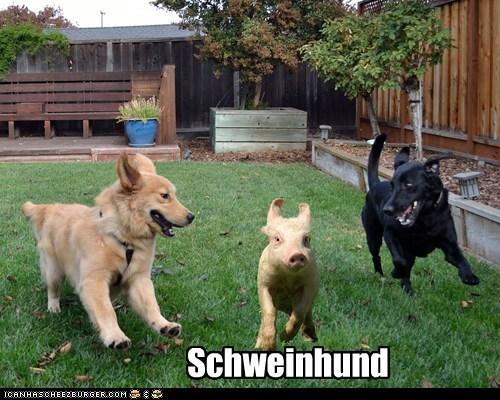 Cheezburger Image 6693156608