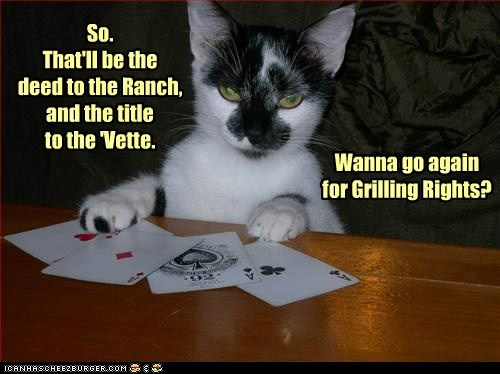 gamble cards captions Cats money poker