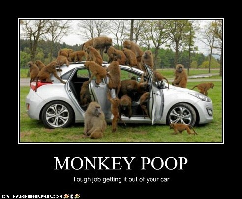 MONKEY POOP Tough job getting it out of your car