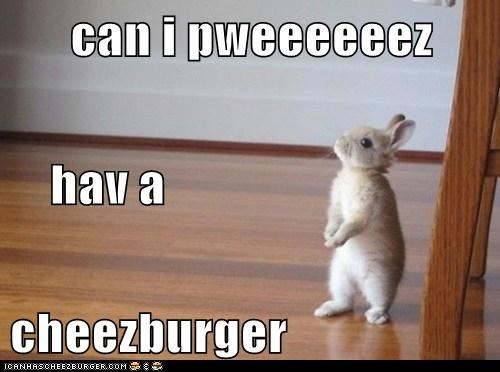 Cheezburger Image 6693883392