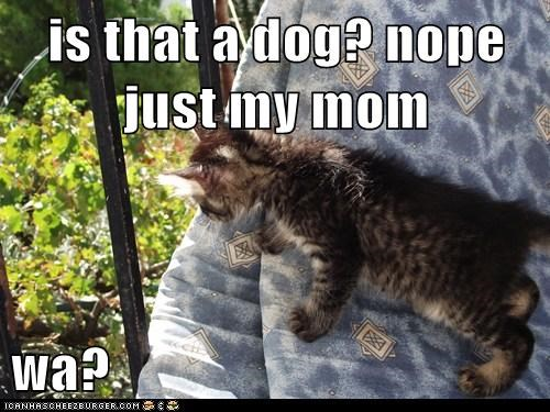 is that a dog? nope just my mom  wa?