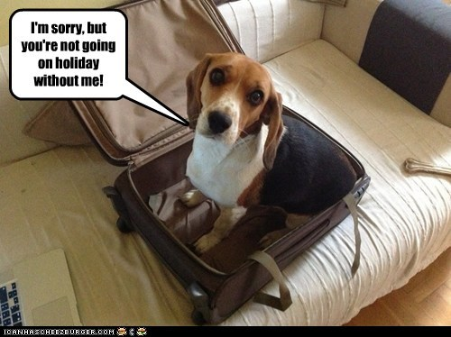 Take Me With You Dogs Holiday Suitcase Beagle Vacation