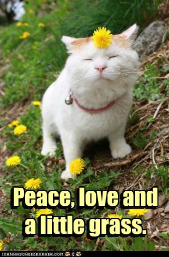 grass peace love hippie mj Cats captions - 6694536704