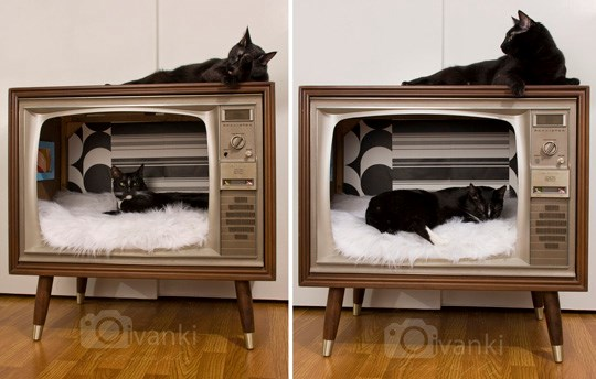 inspiration recycle DIY beds Cats - 6694917