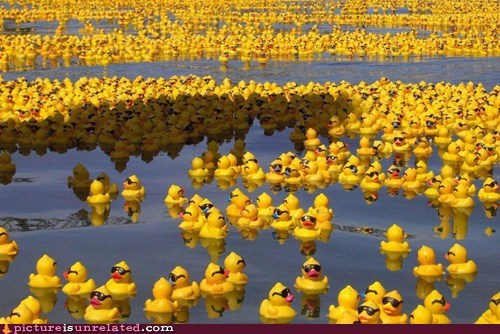 swimming,rubber ducks,water,sunglasses
