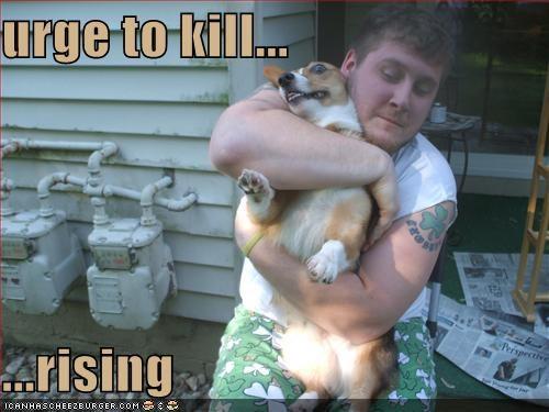 corgi fighting hugging - 669504256