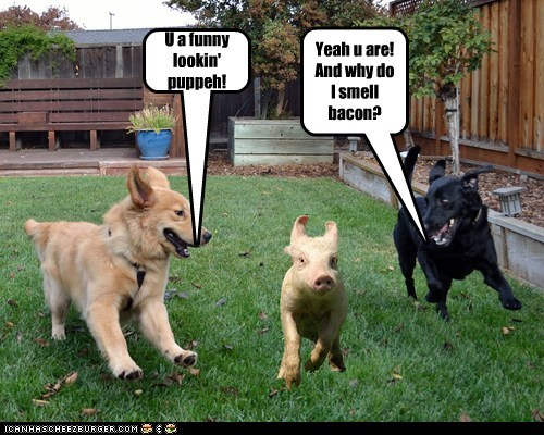 U a funny lookin' puppeh! Yeah u are! And why do I smell bacon?
