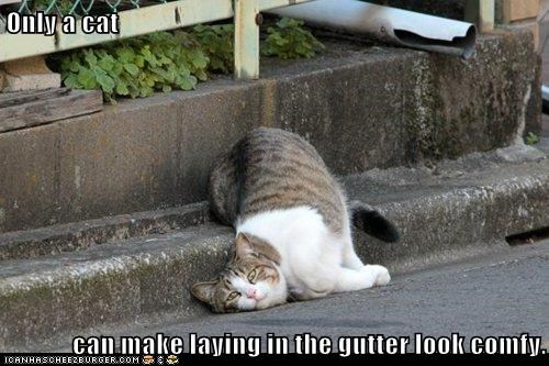 Only a cat  can make laying in the gutter look comfy.