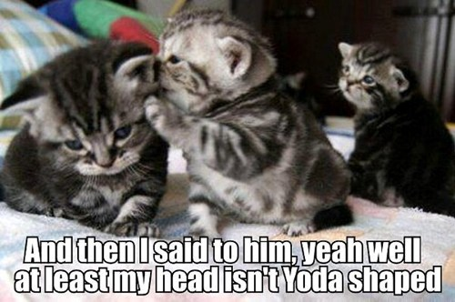 yoda gossip gossiping whispering secrets insults mean Sad Cats kitten captions - 6695895040