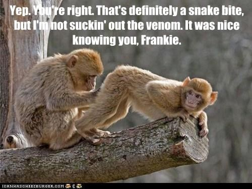 butt monkeys nice knowing you inspection Venom snake bite - 6696195584