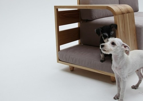 bed design cute doggie Sundog