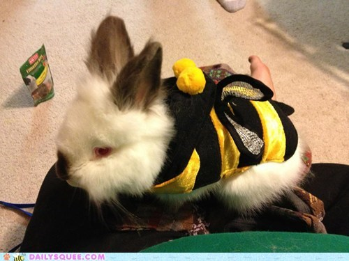costume,reader squee,Bumblebee,halloween,happy bunday,rabbit,bunny,squee
