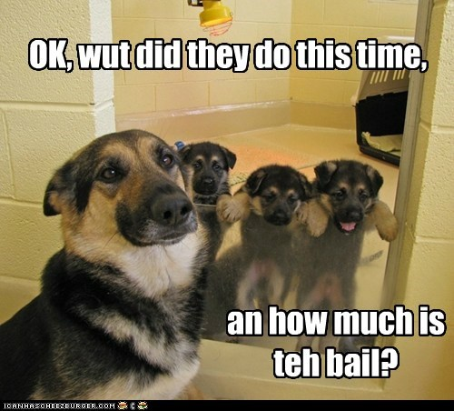 dogs,german shepherd,bail,jail,puppies
