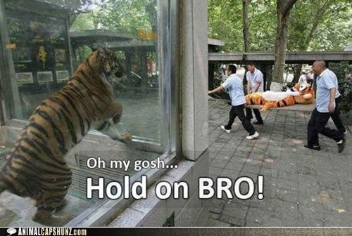 hold on,oh my gosh,tigger,stretcher,scared,tiger