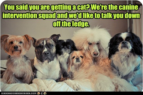 You said you are getting a cat? We're the canine intervention squad and we'd like to talk you down off the ledge.
